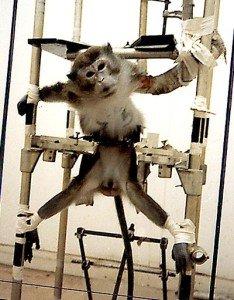 singe-animal-testing